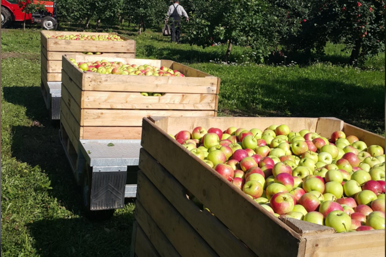 obuolių prekyba sistemoje